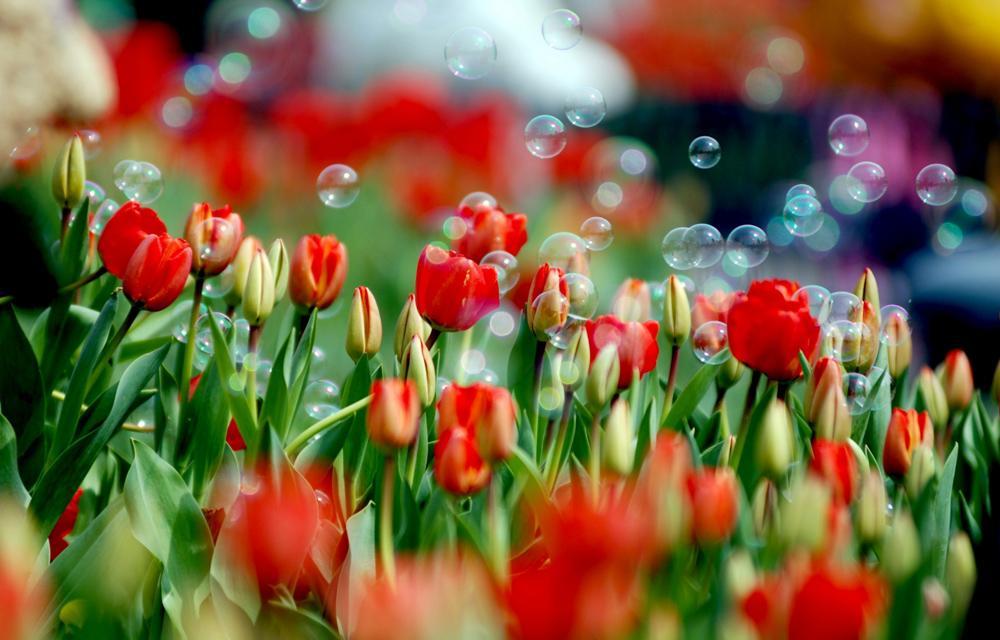 Флеш-моб «Все цвета радуги».