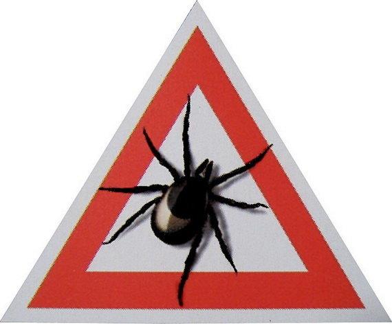 Весенний оберег (страхование от клещевых инфекций)